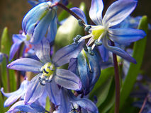 Flores. Fotografia de Stock Royalty Free