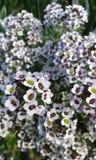 flores Lizenzfreies Stockbild