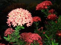 Flores 2 Imagem de Stock Royalty Free