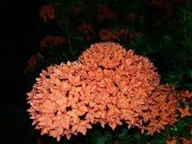 Flores 3 Foto de Stock