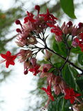 flores 免版税图库摄影