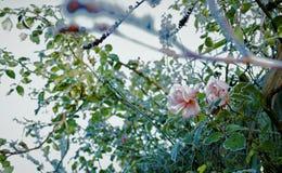 Flores Fotografia de Stock