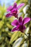 2 flores Imagenes de archivo