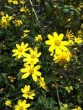 Flores 2 Imagen de archivo libre de regalías