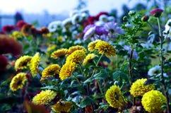 Flores Foto de archivo