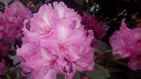 flores Fotografia Stock Libera da Diritti
