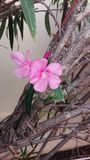 flores Arkivfoton