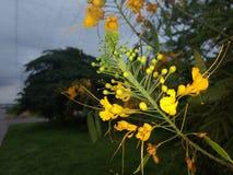Flores! Imagem de Stock Royalty Free