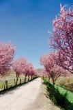 Flores Imagens de Stock Royalty Free