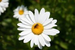 Flores Imágenes de archivo libres de regalías