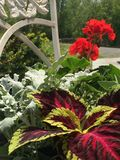 Flores Fotos de archivo libres de regalías