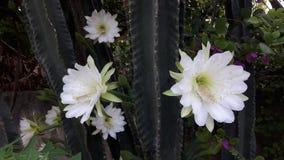 flores image libre de droits