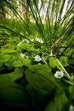 Flores abajo bajo Imagen de archivo