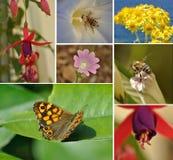 Flores, abejas y mariposa Imagenes de archivo