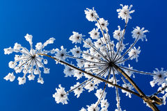 Flores abstractas Fotos de archivo