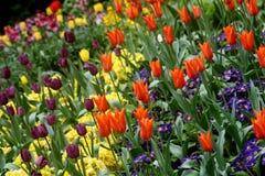 Flores abstractas Imagen de archivo libre de regalías