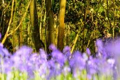 Flores abstractas de la campanilla en primavera Fotos de archivo libres de regalías