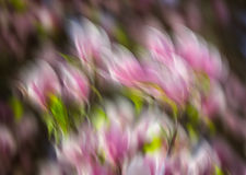 Flores abstractas de la magnolia Fotos de archivo libres de regalías