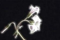 Flores abstractas de los oxalis del fractal Fotografía de archivo libre de regalías