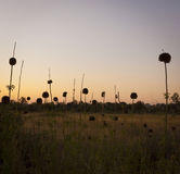 Flores abstractas en la oscuridad Fotos de archivo libres de regalías