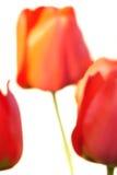 Flores abstractas, fondo decorativo de la belleza Foto de archivo