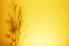 Flores abstratas Fotos de Stock Royalty Free