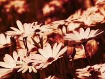 Flores abstratas Fotografia de Stock