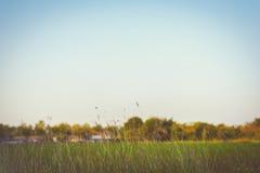 Flores abstratas bonitas da grama Imagem de Stock Royalty Free