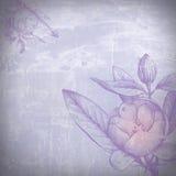 Flores acuosas Fotografía de archivo