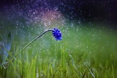 Flores adiantadas bonitas da mola na noite Imagens de Stock