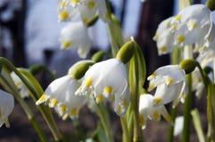 Flores adiantadas espetaculares, coloridas da mola na luz do sol no jardim, foco seletivo, espaço para o texto fotografia de stock