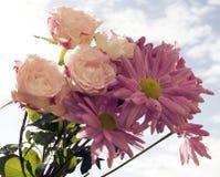 Flores agradáveis Fotografia de Stock Royalty Free