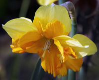 Flores agradáveis Imagem de Stock Royalty Free