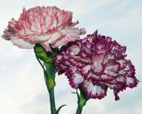 Flores agradáveis Imagens de Stock Royalty Free