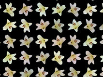 Flores agradáveis Foto de Stock Royalty Free