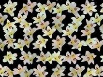 Flores agradáveis Imagens de Stock