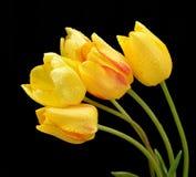 Flores agradáveis da mola Imagem de Stock Royalty Free