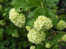 Flores agradáveis da mola com folhas verdes imagem de stock
