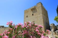 Flores agradáveis do rododendro no castelo de Kolossi Imagens de Stock Royalty Free