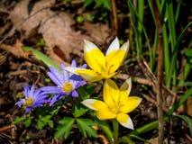 Flores agradáveis na mola imagens de stock royalty free