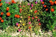 Flores agradáveis no jardim Foto de Stock Royalty Free