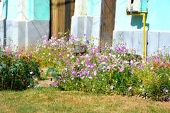 Flores agradáveis no jardim Imagens de Stock