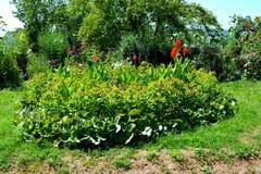 Flores agradáveis no jardim Imagem de Stock Royalty Free