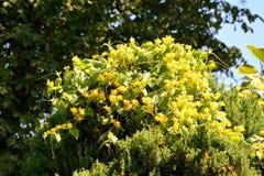 Flores agradáveis no jardim Foto de Stock