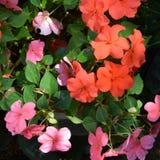 Flores agradáveis no jardim, em um dia de verão Fotos de Stock