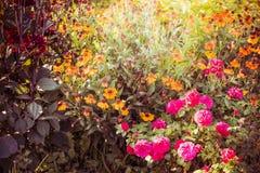 Flores agradáveis no jardim ou no parque, exterior Fotos de Stock