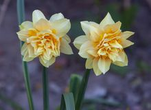 Flores agradables imagenes de archivo