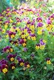 Flores agradables Imagen de archivo libre de regalías