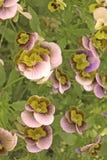 Flores agradables Fotos de archivo libres de regalías