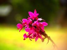 Flores agradables Fotos de archivo